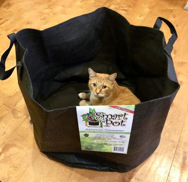 cat in smart pot