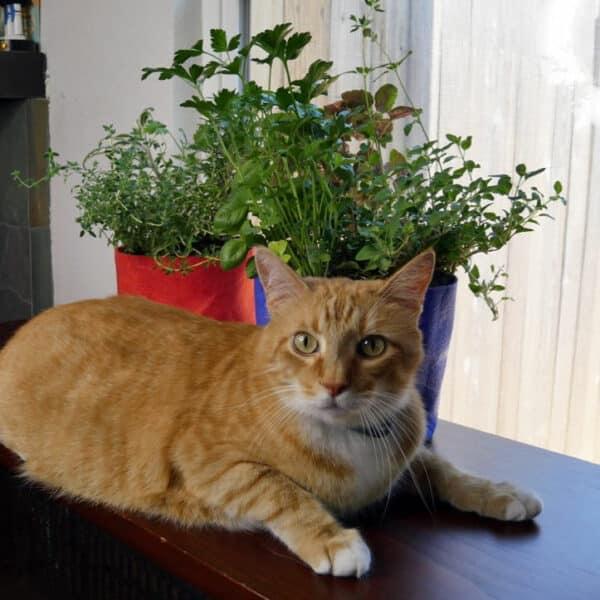 Katzen- und Kräutergarten
