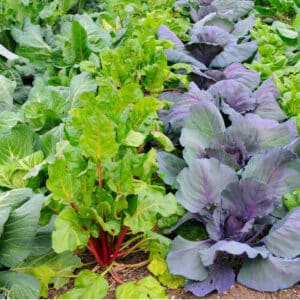 colorful vegetable plants in the garden