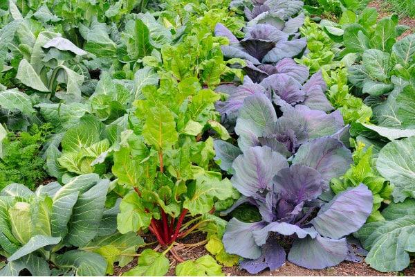 bunte Gemüsepflanzen im Garten