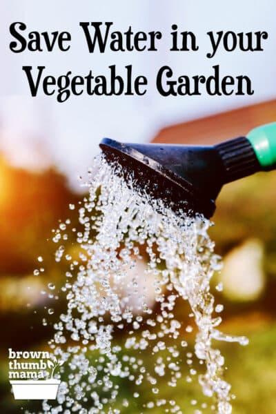 Gießkanne im Garten