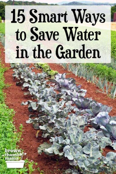 Gemüsereihen wachsen im Garten
