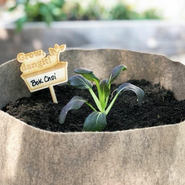 Bok Choi im Smart Pot mit Pflanzenmarker